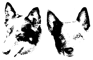 Two-Dog Works